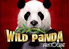 Wild Panda